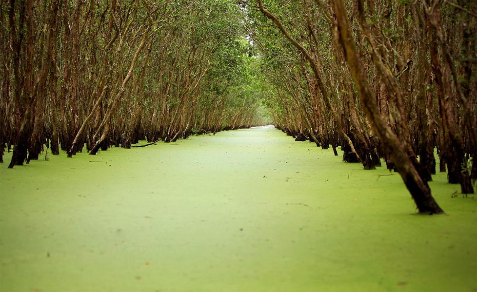 Tra Su Mekong Delta