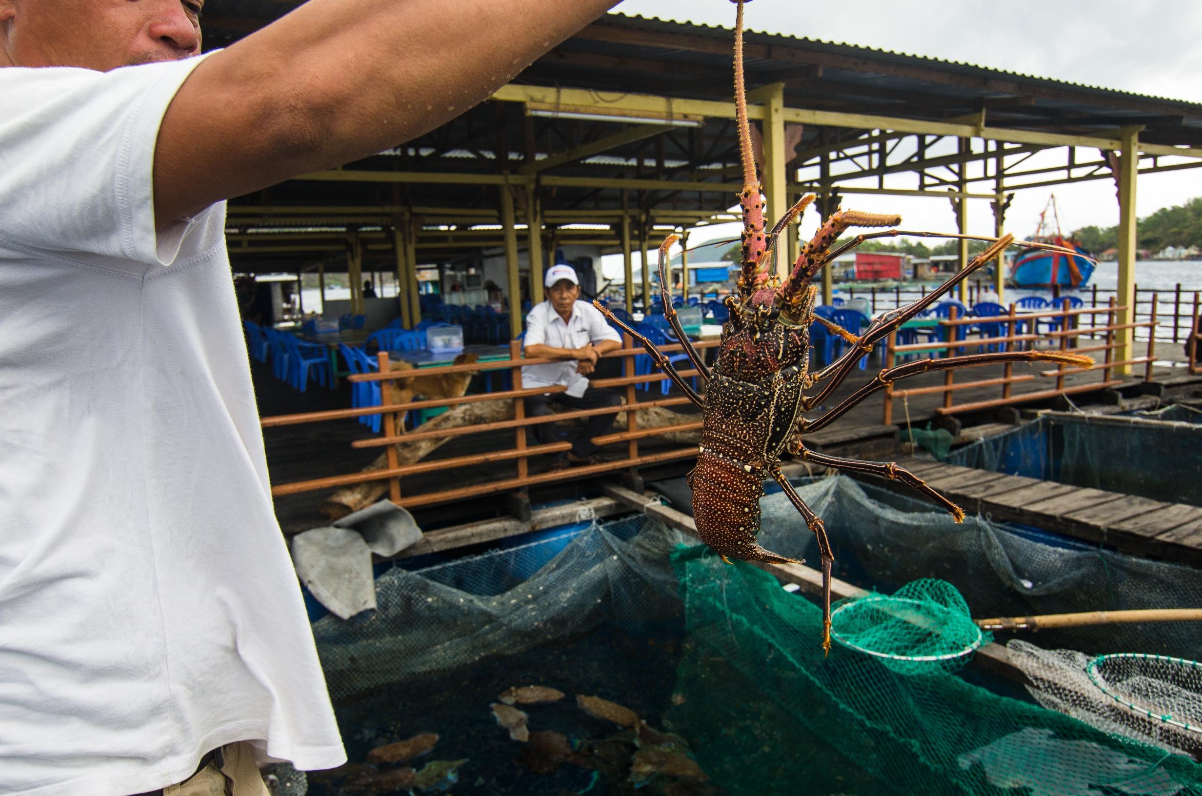 Fresh lobster in Nha Trang