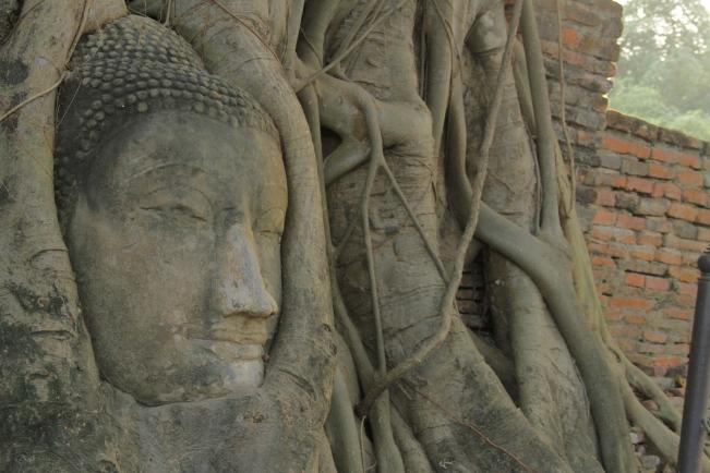 Ayunthaya Thailand - Buddha statue in tree